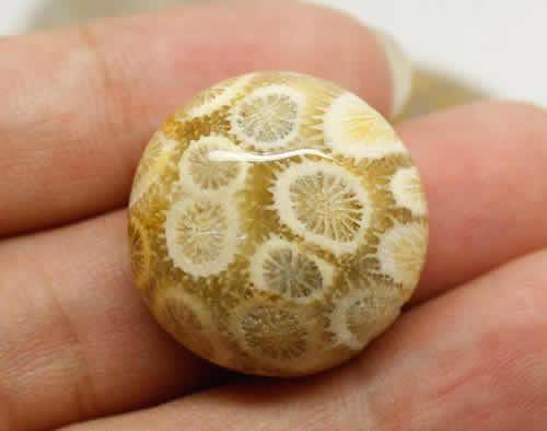 珊瑚玉是什么 珊瑚玉如何